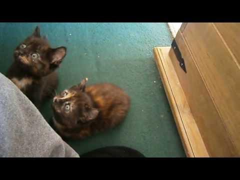 mesmerised kittens.