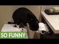 やっぱ敵認定なのか…。トイレットペーパーを熱心に掻き毟る猫の所業