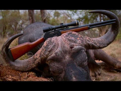 Cape Buffalo Hunt (South Africa Part 1 Of 2) - Viking Chronicles With Kyle Lamb (Season 2)