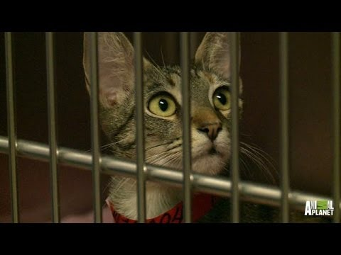 Why Jackson Galaxy Does What He Does | My Cat From Hell