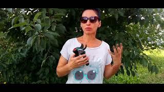 Обзор: аккумуляторные садовые ножницы EasyPrune BOSCH