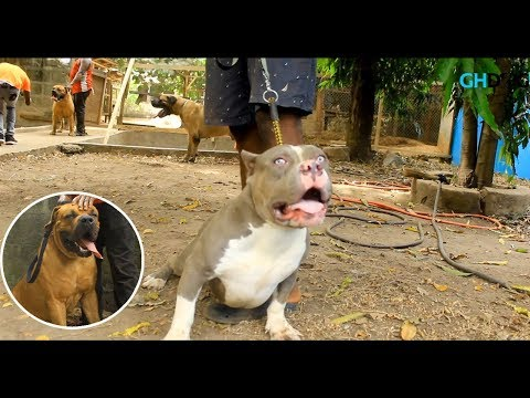 Over 60 Dogs In One Kennel  ||  A Visit To Pet Planet Ghana || GH Dog TV