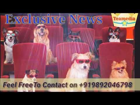 Cinema For dogs ll Beijing, China ll Cute Beast Pet Resort ll