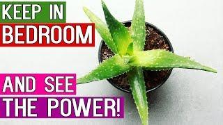 10 Best Indoor Plants That Produce Oxygen 24/7 – Ideal Bedroom Plants