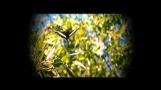 Crossroads - Caterpillar, Butterfly