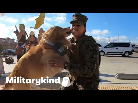 Golden retriever flips out when Marine comes home | Militarykind