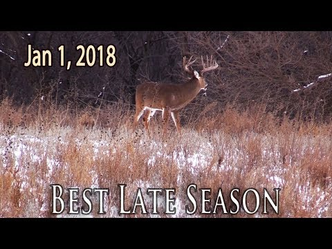 Perfect Late Season Conditions | Midwest Whitetail
