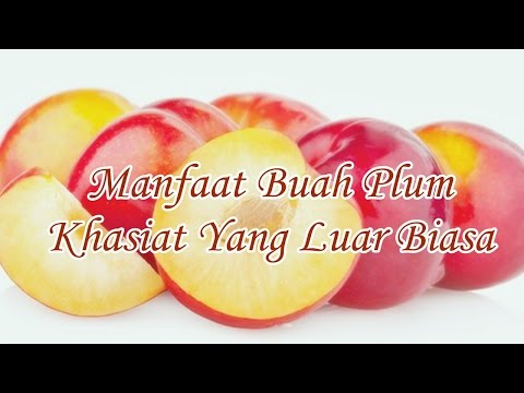 manfaat-buah-plum-khasiat-yang-luar-biasa