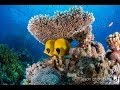 Red Sea Diving - Northern Wrecks and Reefs