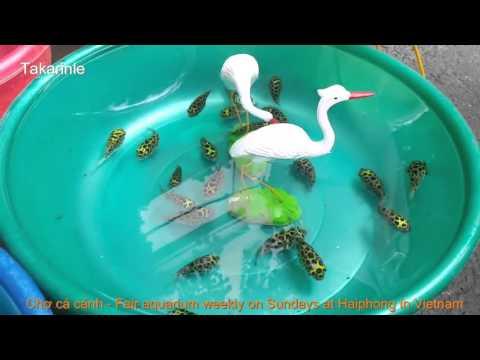 Thú chơi cá cảnh của người Hải phòng   Fair aquarium and ornamental plants