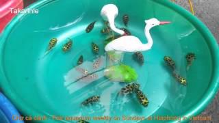 th chơi c cảnh của người hải phng fair aquarium and ornamental plants