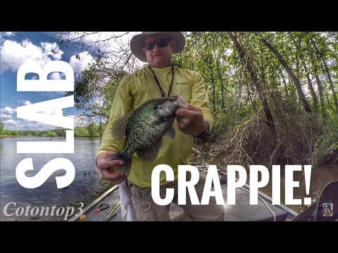Crappie fishing- catching huge slabs on the Tombigbee river, Columbus, Ms!