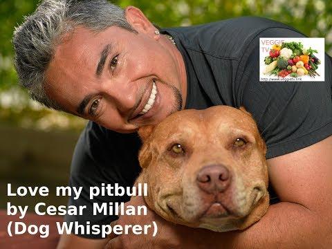 I love my pitbull by Cesar Millan (the dog whisperer)