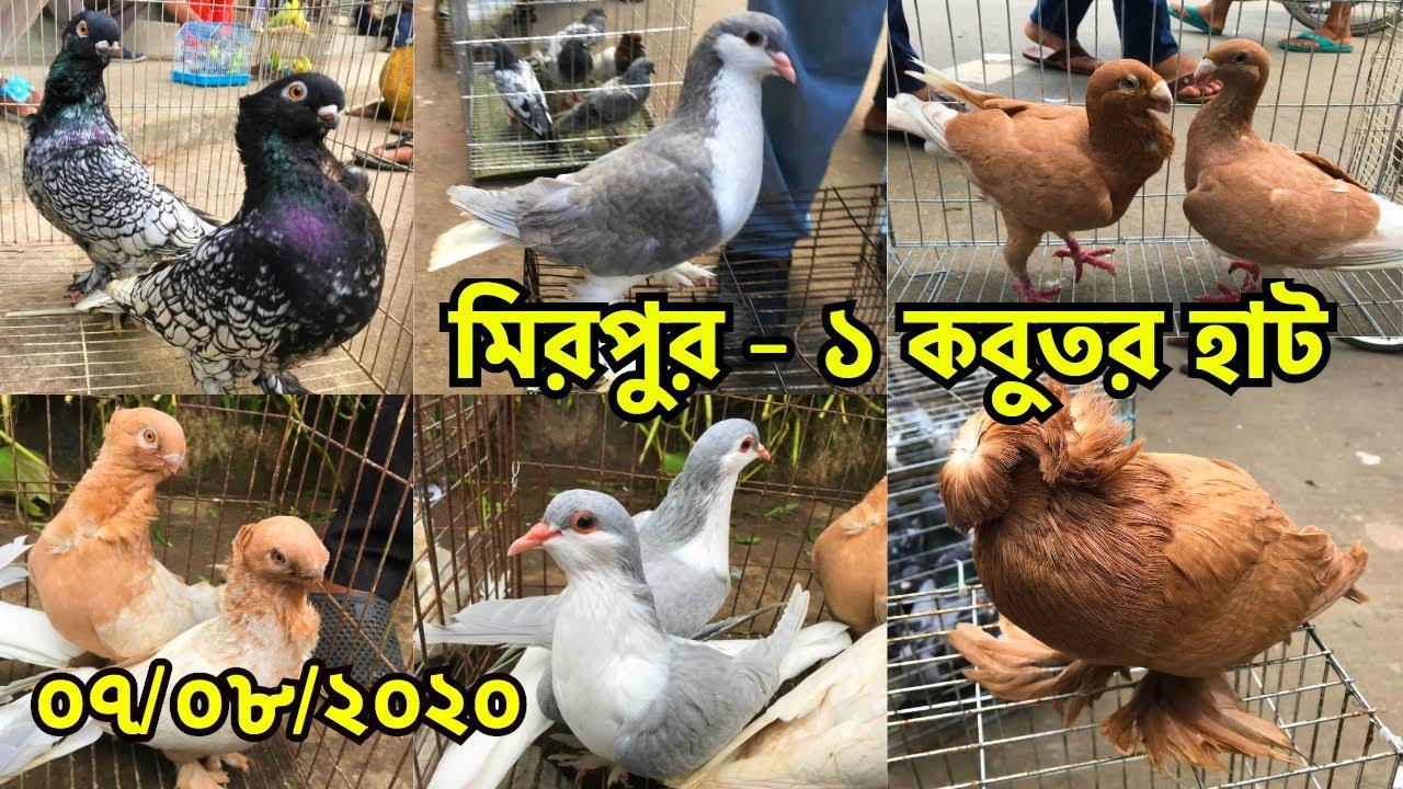 ঈদ পরবর্তী জমজমাট মিরপুর - ১ কবুতর হাট | কবুতরের বাজার দর জানুন | Mirpur - 1 Pigeon Market (V - 126)