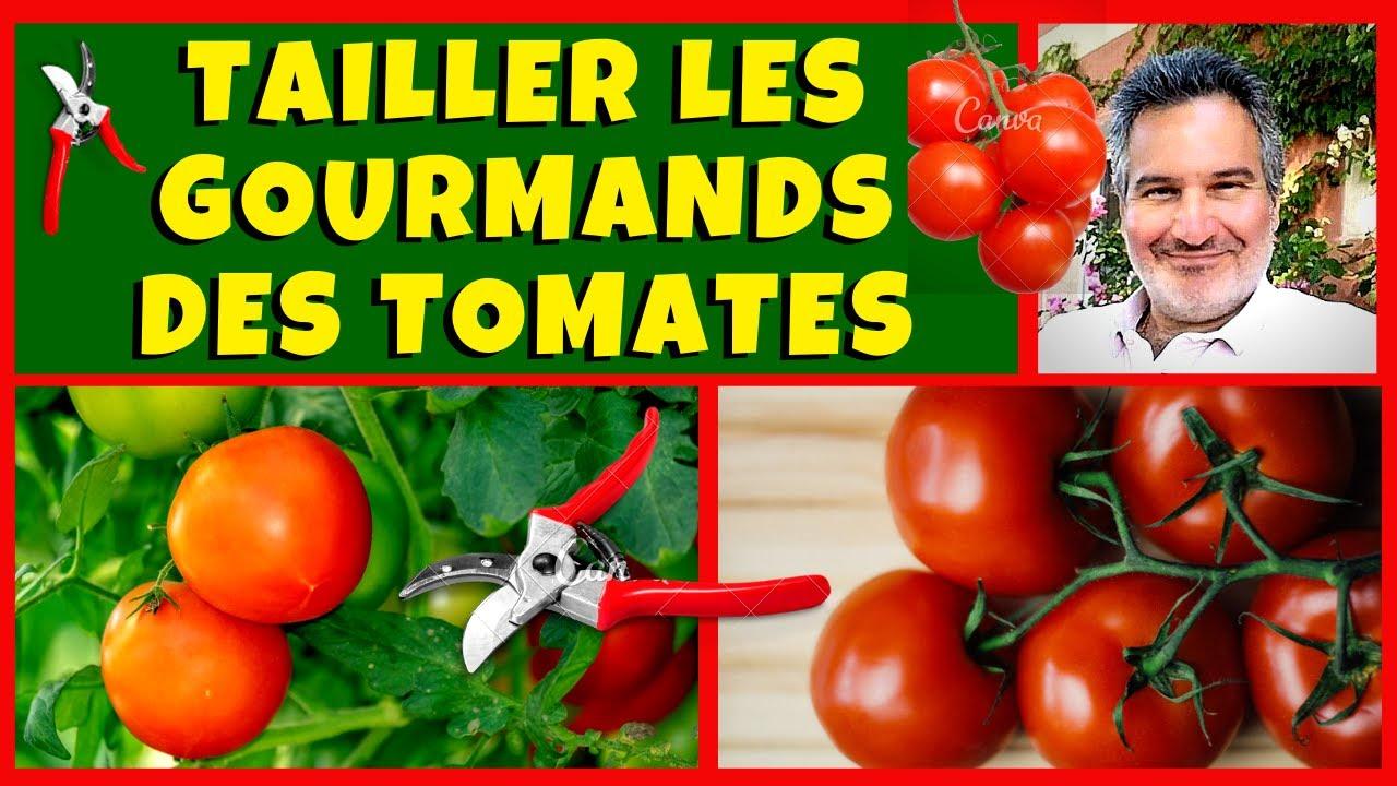 faut il couper les gourmands des plants de tomates youtube. Black Bedroom Furniture Sets. Home Design Ideas