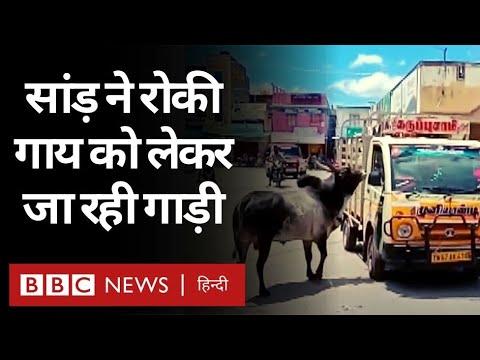 Animals के बीच कितना प्यार होता है, इस वीडियो से पता चलता है...(BBC Hindi)