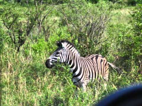 Amazing Africa 2010: 3. Zululand