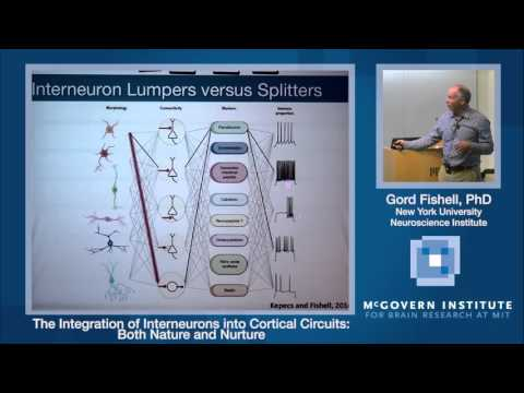 Gordon Fishell: The Integration of Interneurons into Cortical Circuits
