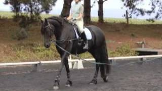 Improve your seat with Erica Poseley - An introduction to Rider Biomechanics