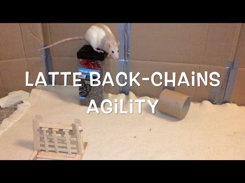 Latte Back-Chains Agility