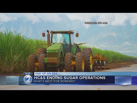 Hundreds of sugar plantation employees to receive support during layoffs