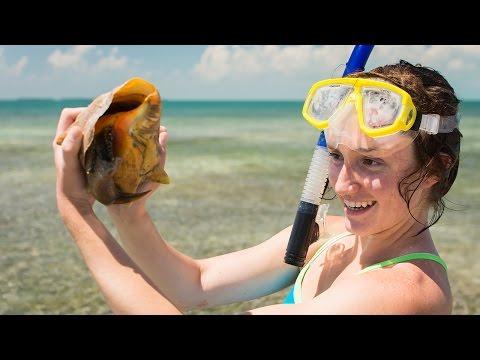 Marine Biology Program at Hillsdale College
