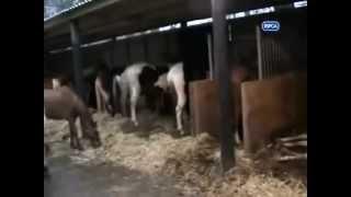 Video Extreme Cruelty of Helpless Horses download MP3, 3GP, MP4, WEBM, AVI, FLV Juli 2018