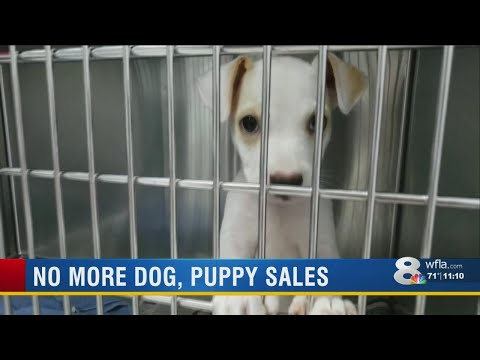 Tampa Pet Store Stops Selling Puppies, Offering Rescue Dogs For Adoption Instead