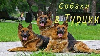 Выставка собак. Измит.Турция.