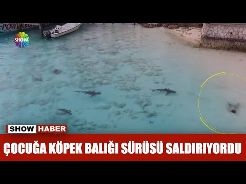 Çocuğa köpek balığı sürüsü saldırıyordu