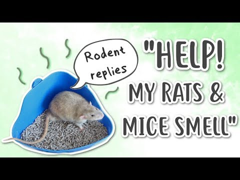 HOW TO REDUCE RAT & MOUSE ODOUR | Rodent Replies
