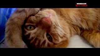 У кота болит голова(У моего кота Смурфика разболелась голова из-за того что вечно спит и просыпается чтобы покушать. Мой канал:..., 2014-06-27T10:51:22.000Z)