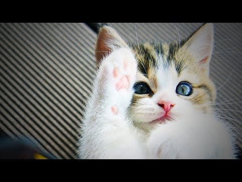 Funny Cute Kittens  🐱 😍 Funny and Cute Kittens Playing (Part 2) [Epic Life]