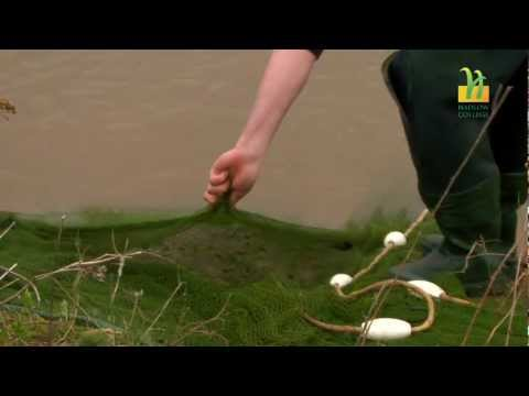 Fisheries Management at Hadlow College
