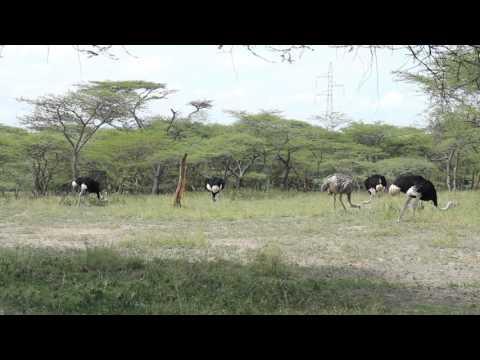 Abijatta-Shalla National Park, Ethiopia