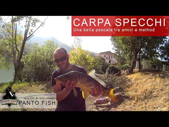 Carpa Specchio method feeder Tusa