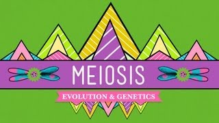 Crash Course: Biology: Meiosis I: The Four Phases thumbnail