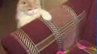 видео Как выбрать любимца?  -  Все для дома  -  Домашние животные  -  Каталог статей и интернет-ресурсов -  Статьи о многом