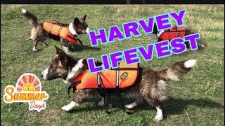 HARVEY ON HIS LIFEVEST/WELSH CORGI CARDIGAN/ROYAL DOG/BUGOS VLOG