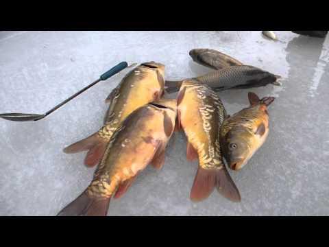 запрет на рыбалку весна 2016 белгородская область