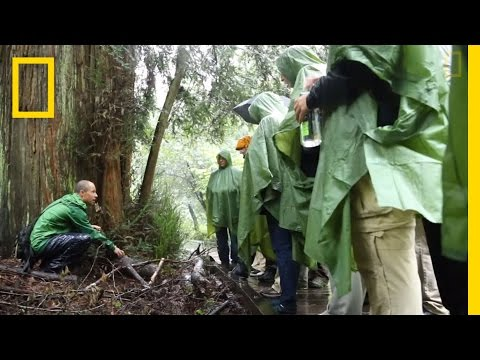BioBlitz Finds 2,300+ Species in Golden Gate Parks | National Geographic