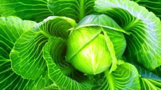 КАПУСТА ПОЛЬЗА И ВРЕД | польза капусты для организма