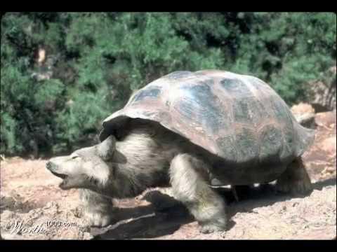 Amazing Morphed Animals - Photoshop Weirdness - YouTube