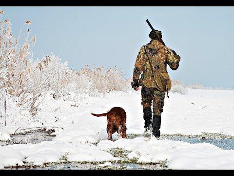 Как охотиться на лося зимой? Секреты таёжного охотника!