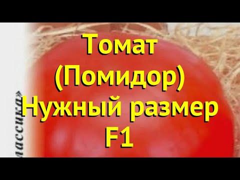 Томат обыкновенный. Краткий обзор, описание характеристик, где купить семена Нужный размер F1