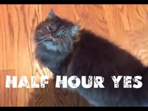 hqdefault half hour yes cat youtube