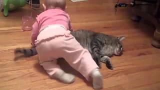 Gato paciente brinca com bebê