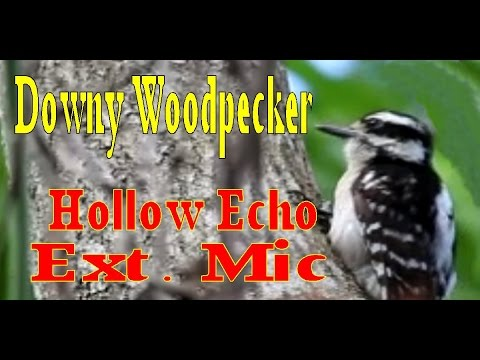 how to keep woodpeckers from pecking your house