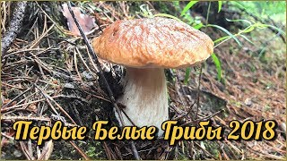 ПЕРВЫЕ БЕЛЫЕ ГРИБЫ 2018 |  Новый лес, новые эмоции | Сбор летних грибов в июле