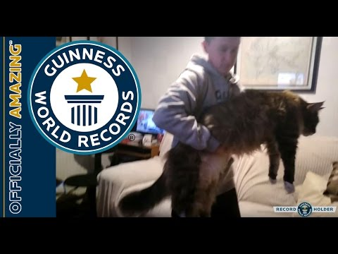 2017 guinness world records longest cat - Biggest Cat In The World Guinness 2017